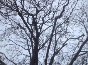 Träd på ingesund
